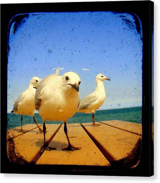 Seagull At The Beach - Ttv  Canvas Print by Tracy Milchick