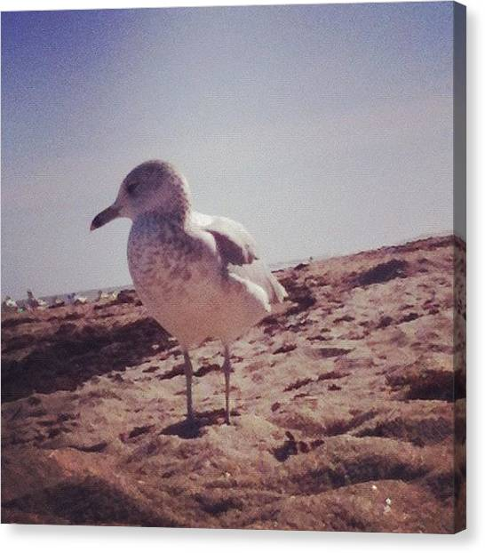 Farmers Canvas Print - Seagull At The Beach by Katie Farmer
