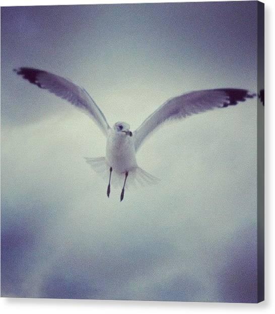 Seagulls Canvas Print - #seagull #bird #instabird #flight by Michael Hughes