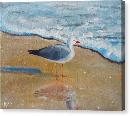 Seagull By The Shore Canvas Print