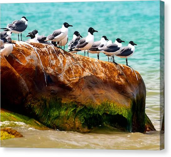 Seagull Cliff Canvas Print