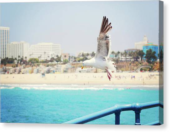 Santa Monica Pier Canvas Print - Seagull Flying by Libertad Leal Photography