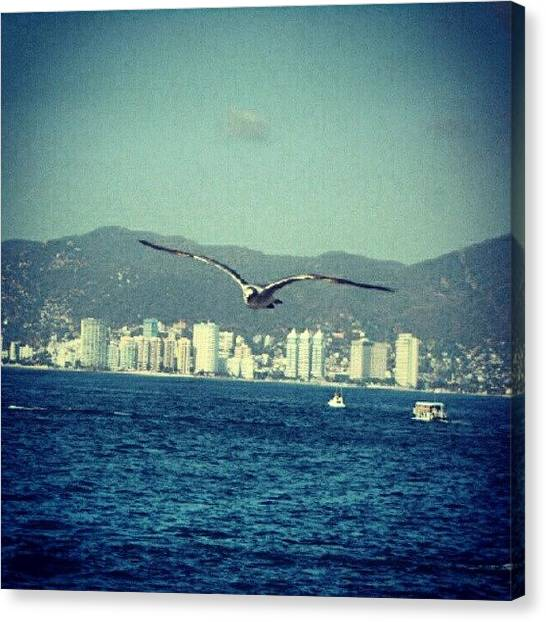 Ocean Animals Canvas Print - Seagull Flying #seagull F#bird #wings by Erick Barba