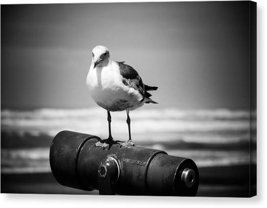 Seagull In Black And White Canvas Print