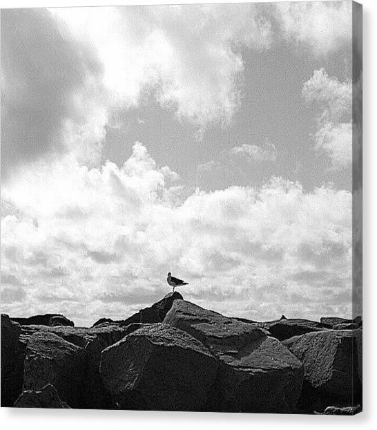 Rhode Island Canvas Print - Seagull In Rhode Island by Oliver Wintermantel