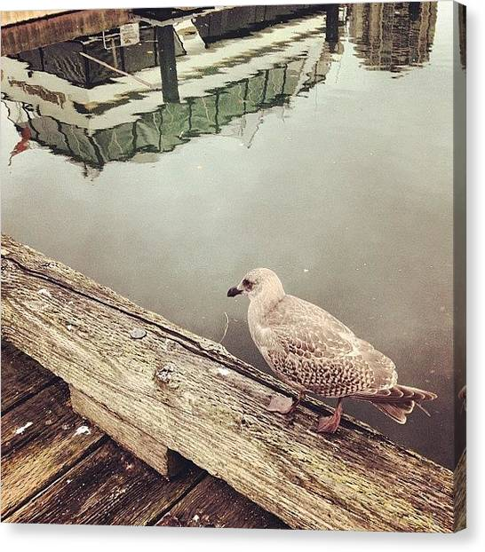 Vancouver Island Canvas Print - #seagull On A #dock @ #granville by Eric Dick