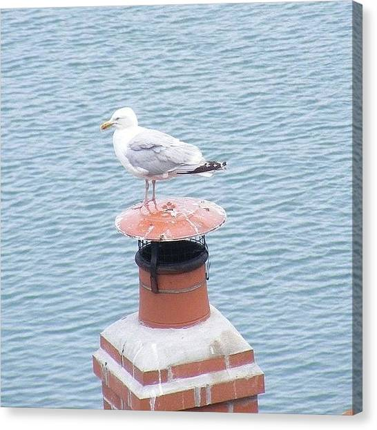 Finches Canvas Print - Seagull Resting On Chimney by Lois Papworth