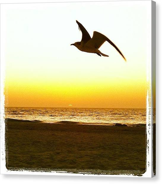 Flying Canvas Print - Seagull Sunset by Jordan Roberts