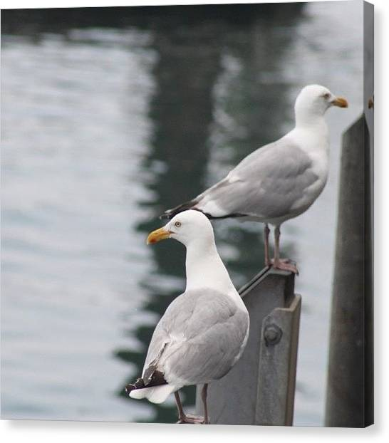 Ocean Animals Canvas Print - Seagulls At The Fish Pier  by Justin Connor