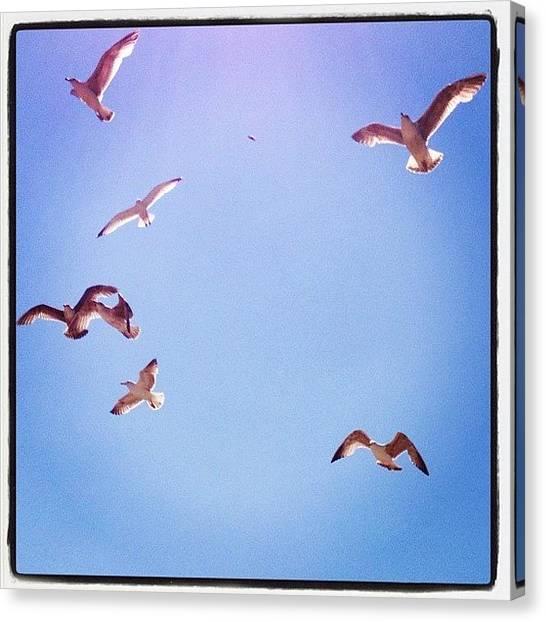 Seagulls Canvas Print - #seagulls #bird #fly #sky by Rachel Williams