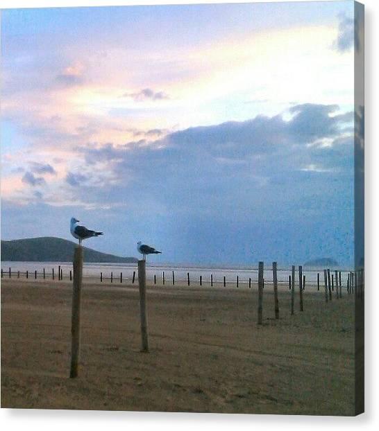 Seagulls Canvas Print - #seagulls #gullporn #seagullporn #posts by Kevin Zoller