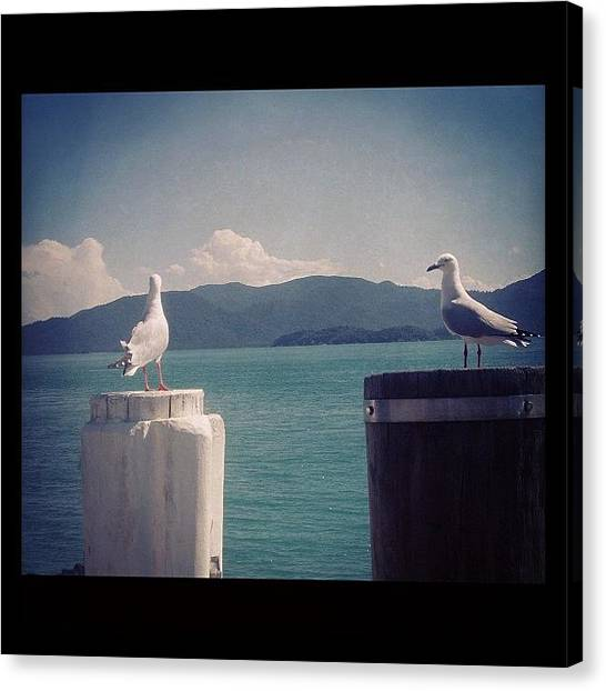 Mac Canvas Print - Seagull's Looking Over Whitsunday by Kay Mac