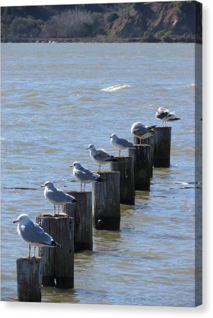 Seagulls Rest Canvas Print