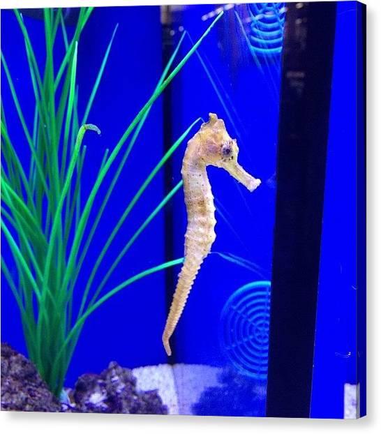 Seahorses Canvas Print - Seahorse At #dobbies #seahorse #fish by Liam James Mcdonald
