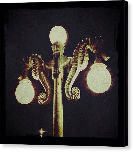 Mexican Canvas Print - Seahorse Night Lights (puerto Vallarta) by Natasha Marco