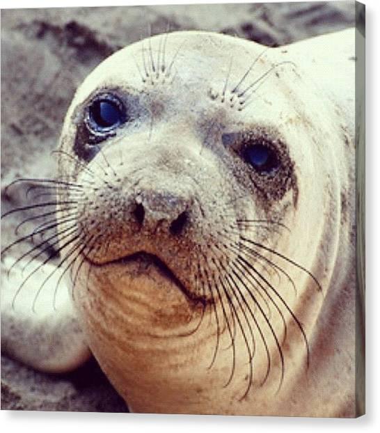 Ocean Animals Canvas Print - #sealoin #sea #ocean #pacific #mammal by Michael Lynch