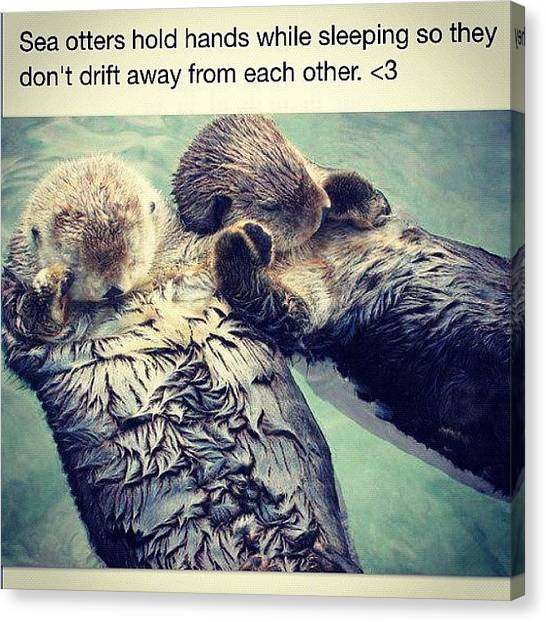 Ocean Animals Canvas Print - #seaotters #love #holdinghands #socute by Delaney Foley