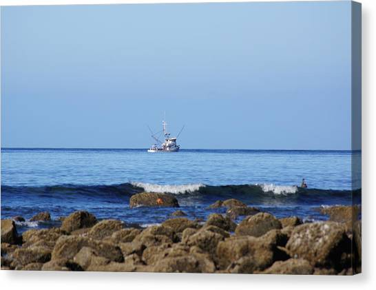 Searching For Crab Canvas Print by Angi Parks
