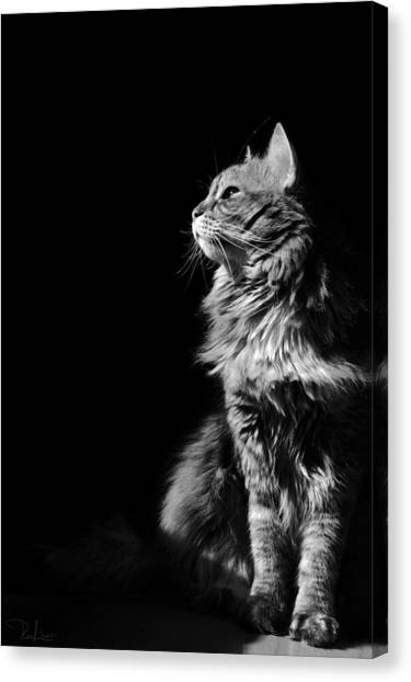Searching The Sun Canvas Print