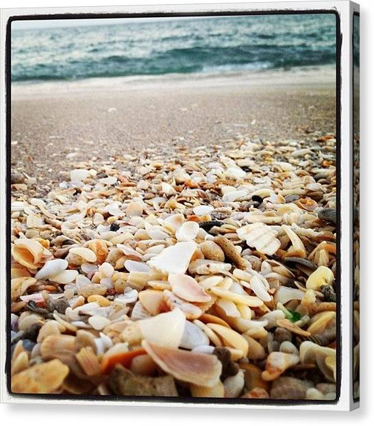 Salt Canvas Print - Seashells By The Seashore by Beach Bum Chix