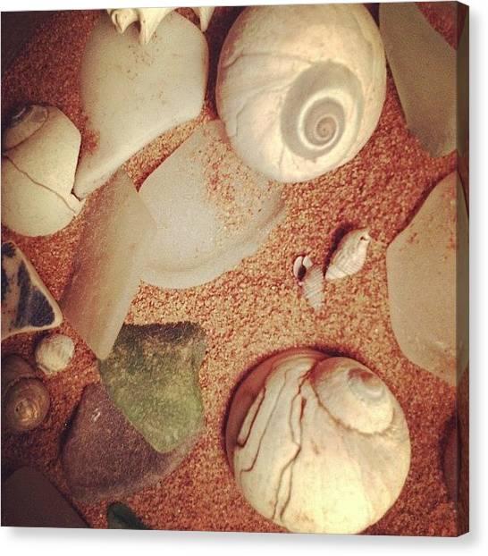Seashells Canvas Print - Seashells By The Seashore by Melissa Snyder