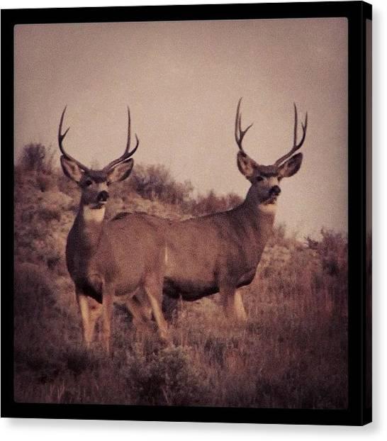 Wyoming Canvas Print - Season Survivors by Lisa King
