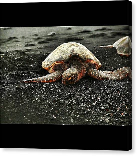 Turtles Canvas Print - #seaturtle #seaturtles #sunset #summer by Emilio Alfieri