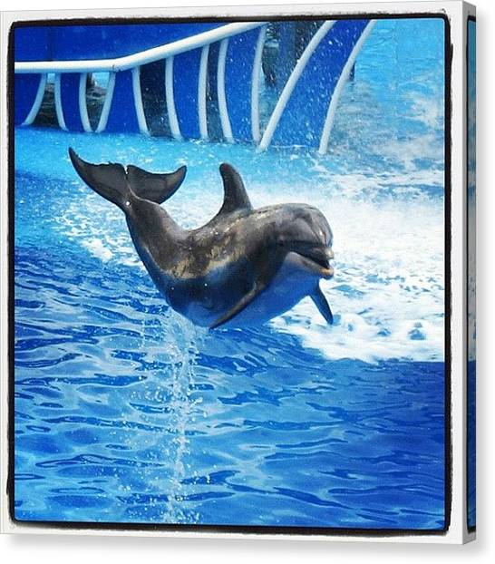 Dolphins Canvas Print - #seaworld #orlando #fl #florida #blue by Yiddy W