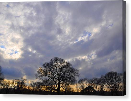 Sedgeley Tree Canvas Print by Andrew Dinh