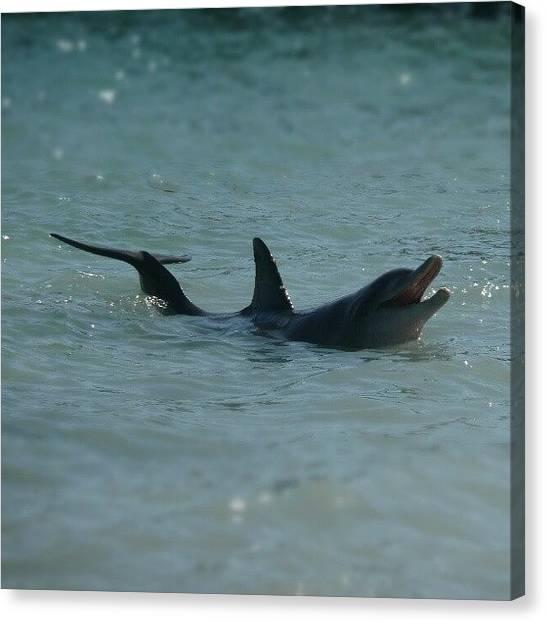 Dolphins Canvas Print - #seeaustralia #australia2010 by Miranda Jongman