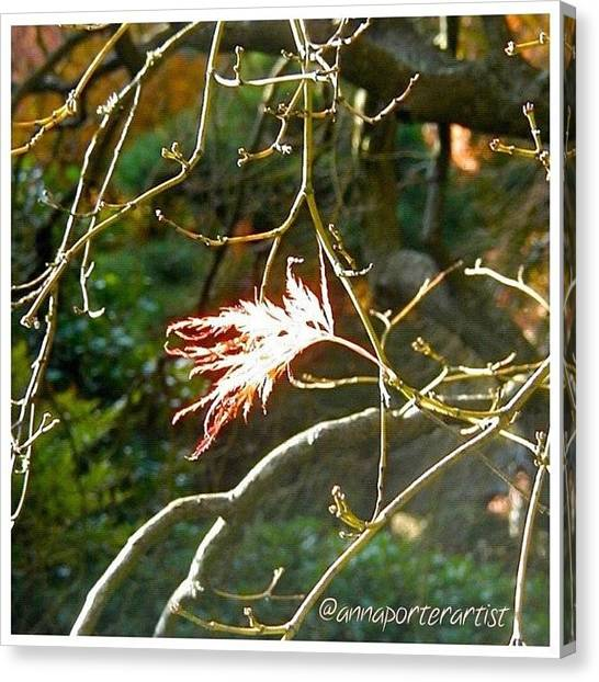 Autumn Leaves Canvas Print - Solo One Shining Leaf by Anna Porter
