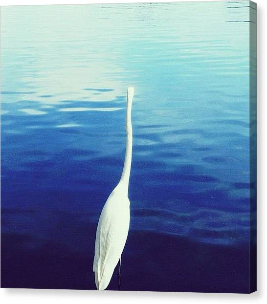 Swans Canvas Print - Series 1/3: | One Is Lonely | by Istories Chi