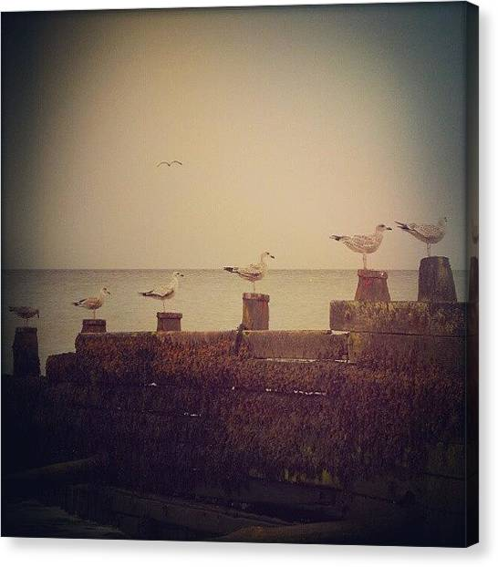 Groin Canvas Print - Seven Seagulls by Alexandra Cook