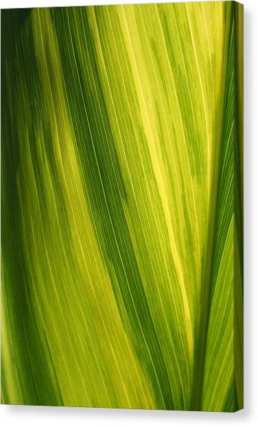Shades Of Green Canvas Print by Ken Riddle