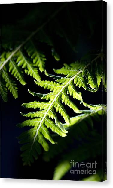 Shadow On Leaf -7 Canvas Print