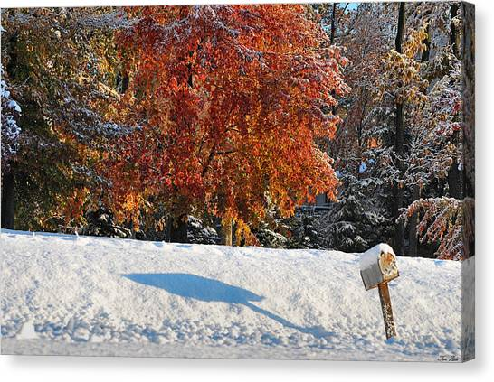 Shadows In The Snow Canvas Print by Kimberly Little