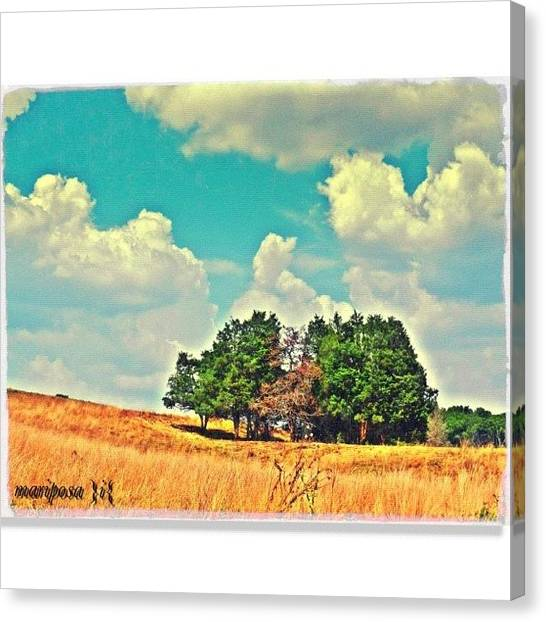 Tennessee Canvas Print - Shady Spot by Mari Posa
