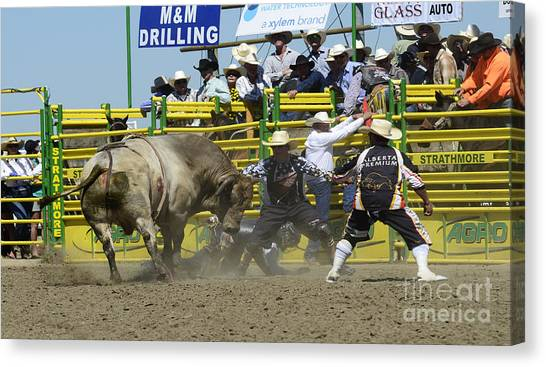Bull Riding Canvas Print - Rodeo Shaking It Up by Bob Christopher