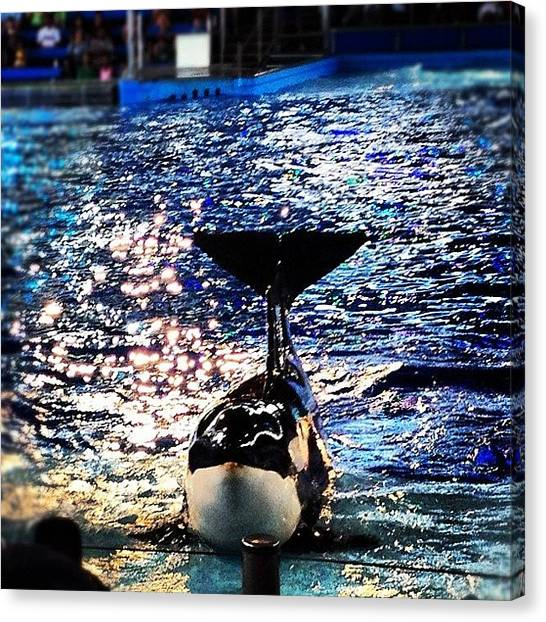 Whales Canvas Print - #shamu #seaworld #performing #animals by Tiffani Alvarez