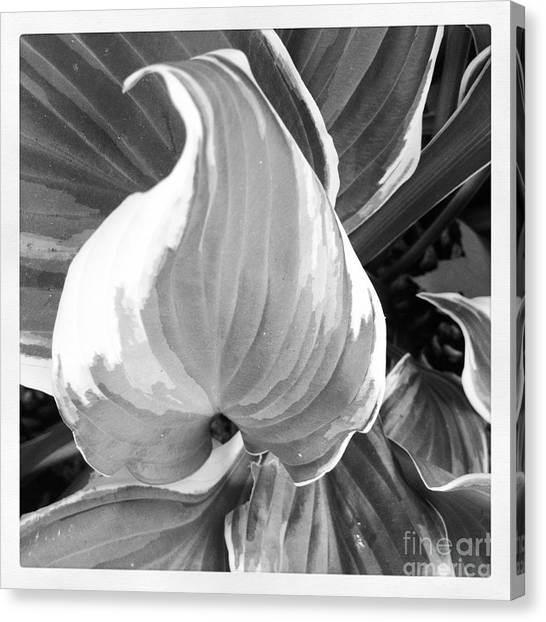 Shape Canvas Print by Susan Wood
