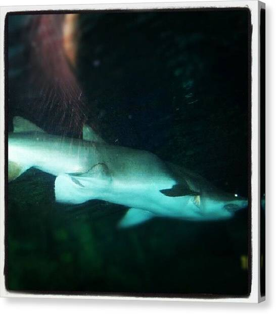 Hammerhead Sharks Canvas Print - Shark by Lynda Larbi
