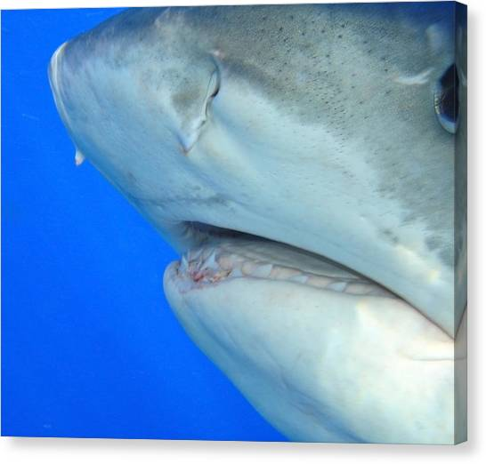 Shark Up Close And Personal Canvas Print