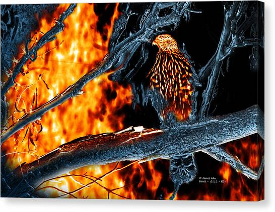 Sharp Shinned Hawk 0112 Fire And Ice Art Canvas Print