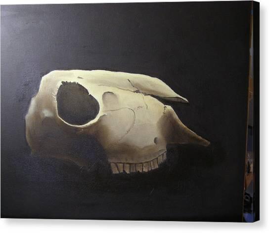 Sheep Skull Canvas Print