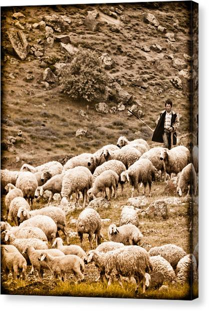 Guzelyurt, Turkey - Shepherd Canvas Print