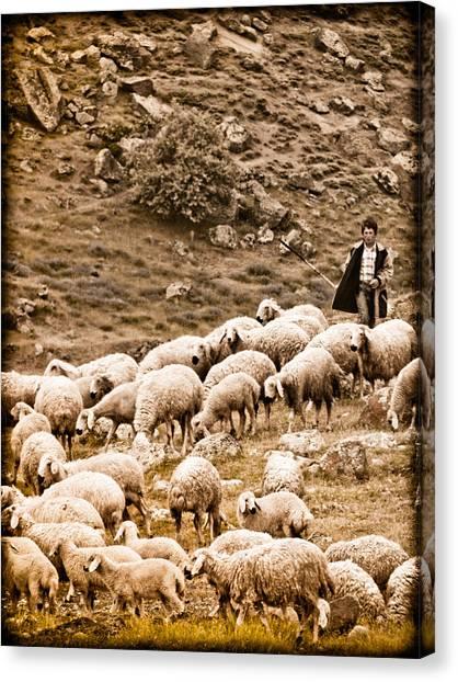 Guzelyurt, Turkey - Shepherd Canvas Print