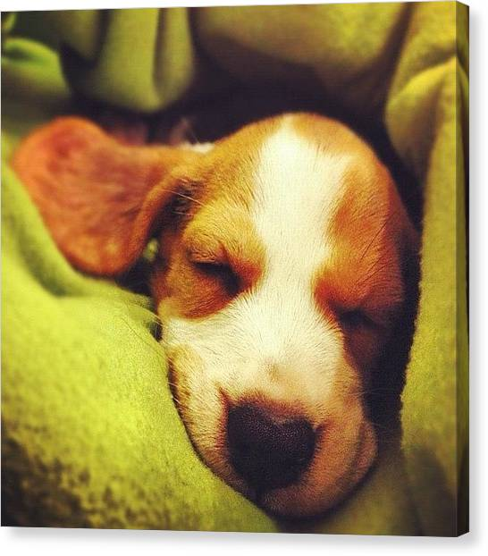 Beagles Canvas Print - Shh.... Little Visitor Is Sleeping by Beatrice Looi