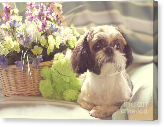 Shih Tzus Canvas Print - Shih Tzu Ginger by Lena Auxier