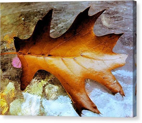 Shiny Oak Canvas Print by Beth Akerman