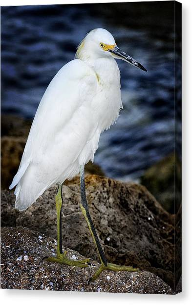 Shore Bird Canvas Print by Ercole Gaudioso